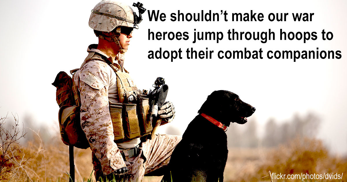 War_dogs_SITE